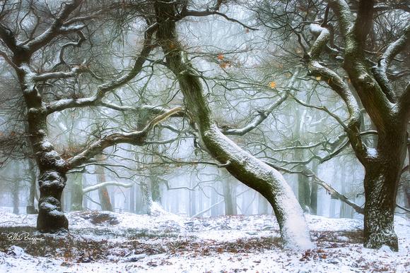 Frozen Fairytale